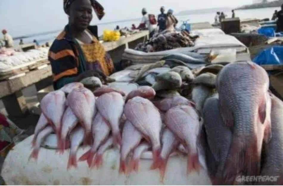 Sierra Leone bans industrial fishing for a month to protect fish stock